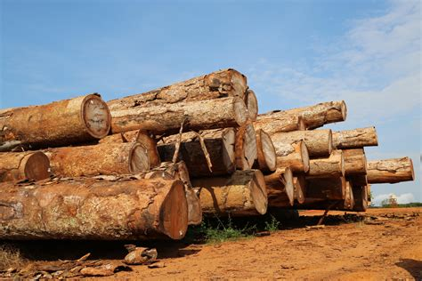 Long-term logging study demonstrates impacts on