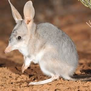 Bilby fence project in Queensland's Diamantina region may
