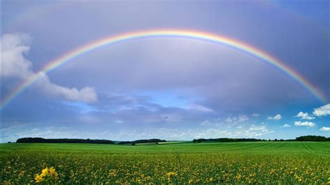 Green Grass Field With Flowers Under Rainbow And Blue Sky