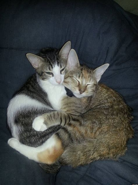 'Married' Cats: Male Cat Stays By Female Cat's Side In