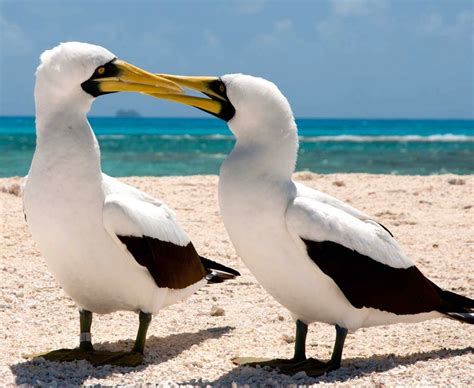 All About the Seabirds Known as Boobies – Updates from the