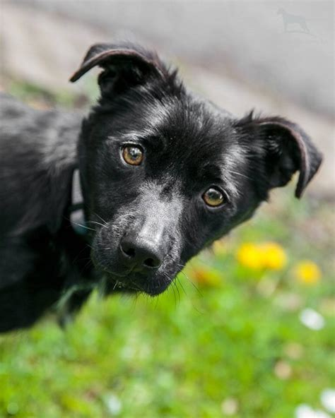 Posts by Allsorts Dog Rescue West Sussex   Dogs for