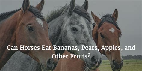 Can Horses Eat Bananas, Pears, Apples, and Other Fruits?