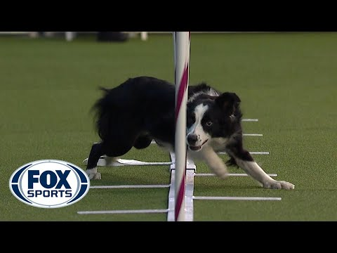 AKC National Obedience Championship – American Kennel Club