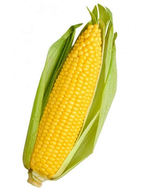 Sweet Corn Indian Heirloom Seeds Pack of 20 - GreenMyLife