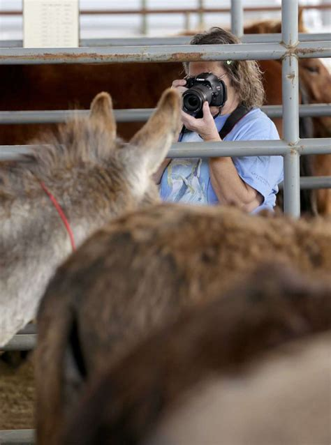 Mustangs and wild burros on adoption block