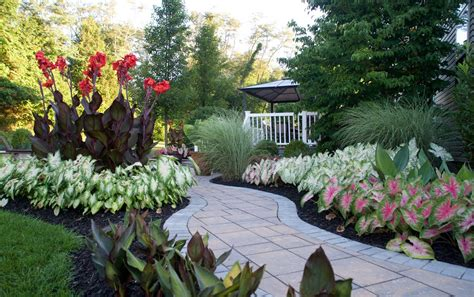 Landscaping Made Easy With Caladiums - Longfield Gardens