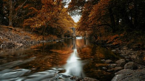 Fall In The River In Autumn Trees Forest 4K HD Nature