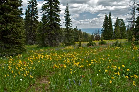 The Ultimate Spring Adventure: A Wildflower Trail Through