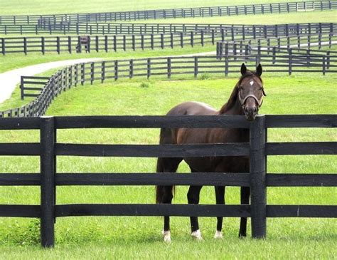 Horse Fencing for Special Needs   Horse fencing, Pasture