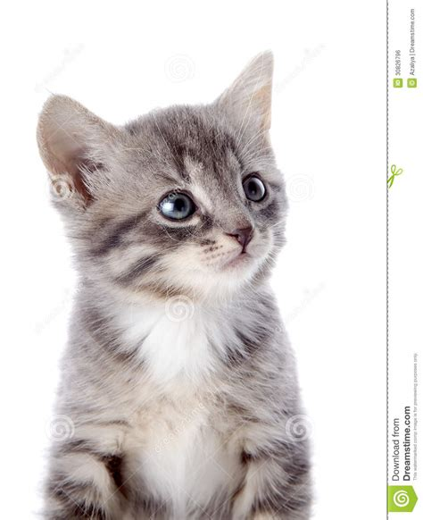 Portrait Of A Gray Striped Kitten With Blue Eyes