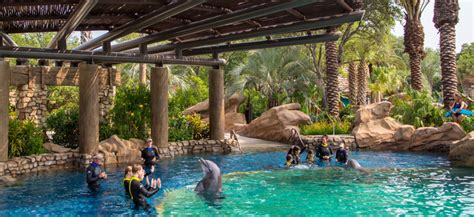 5 Things We Love About Discovery Point at SeaWorld San