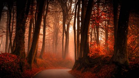 Autumn Forest Wallpapers | HD Wallpapers | ID #19096